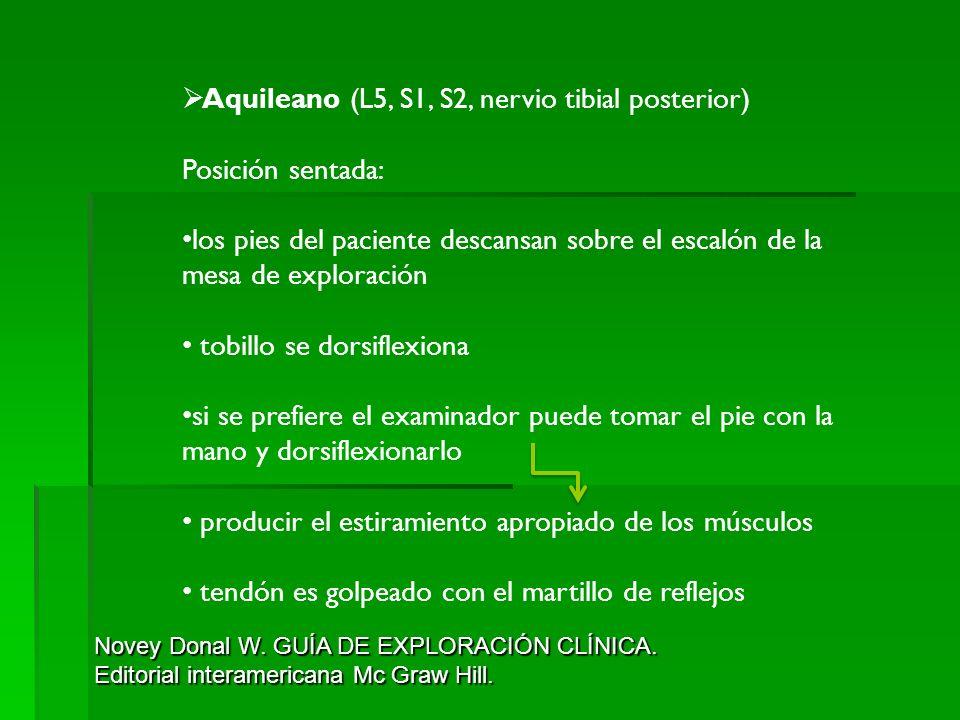 Aquileano (L5, S1, S2, nervio tibial posterior) Posición sentada: