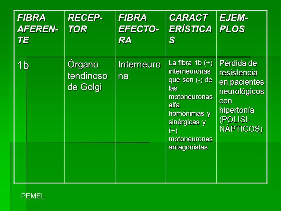 1b FIBRA AFEREN-TE RECEP-TOR FIBRA EFECTO-RA CARACTERÍSTICAS EJEM-PLOS