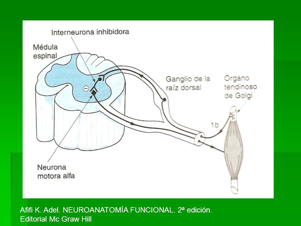 Afifi K. Adel. NEUROANATOMÍA FUNCIONAL. 2ª edición.