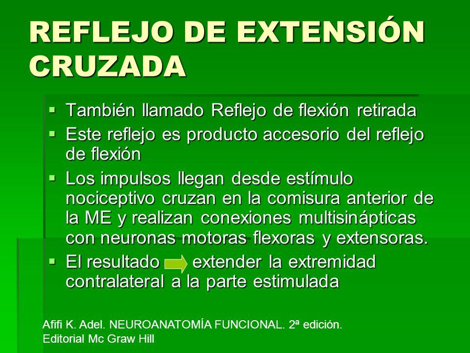 REFLEJO DE EXTENSIÓN CRUZADA