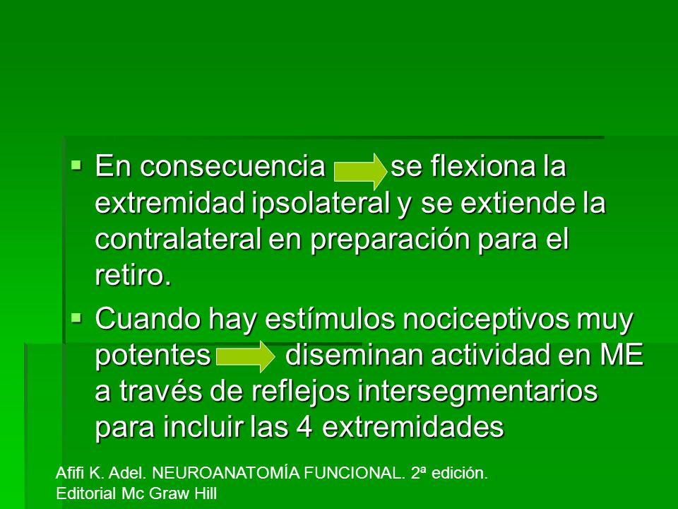 En consecuencia se flexiona la extremidad ipsolateral y se extiende la contralateral en preparación para el retiro.
