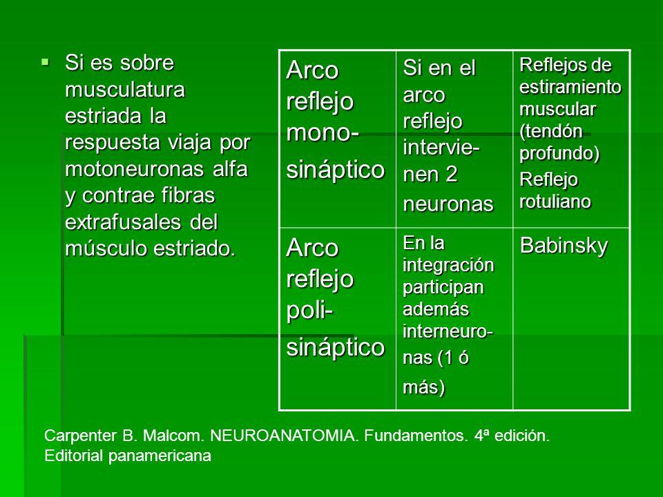 Arco reflejo mono- sináptico Arco reflejo poli-
