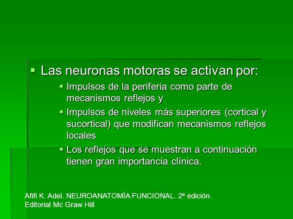 Las neuronas motoras se activan por: