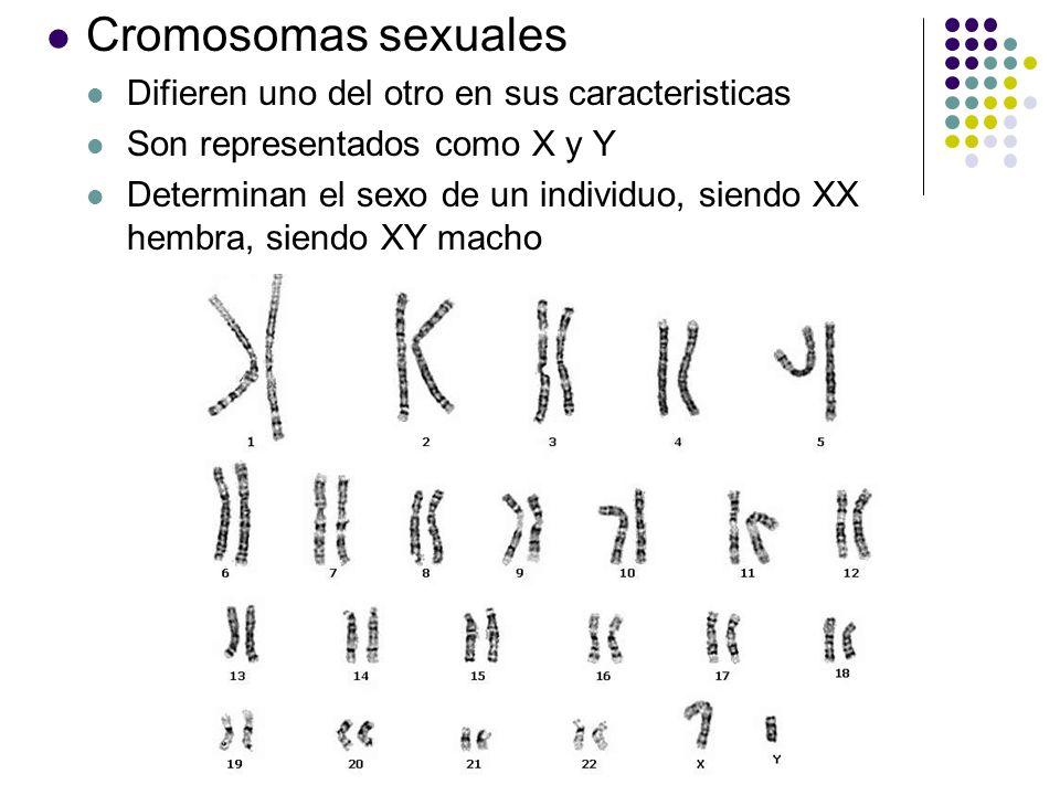 Cromosomas sexuales Difieren uno del otro en sus caracteristicas