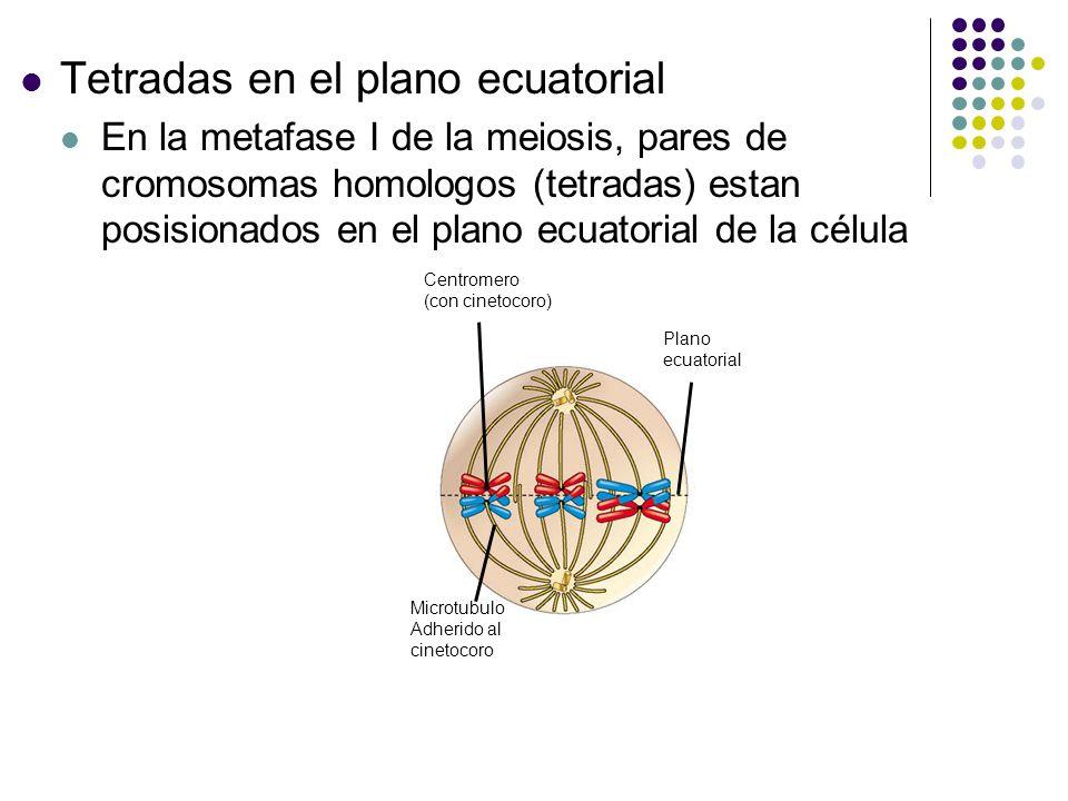 Tetradas en el plano ecuatorial