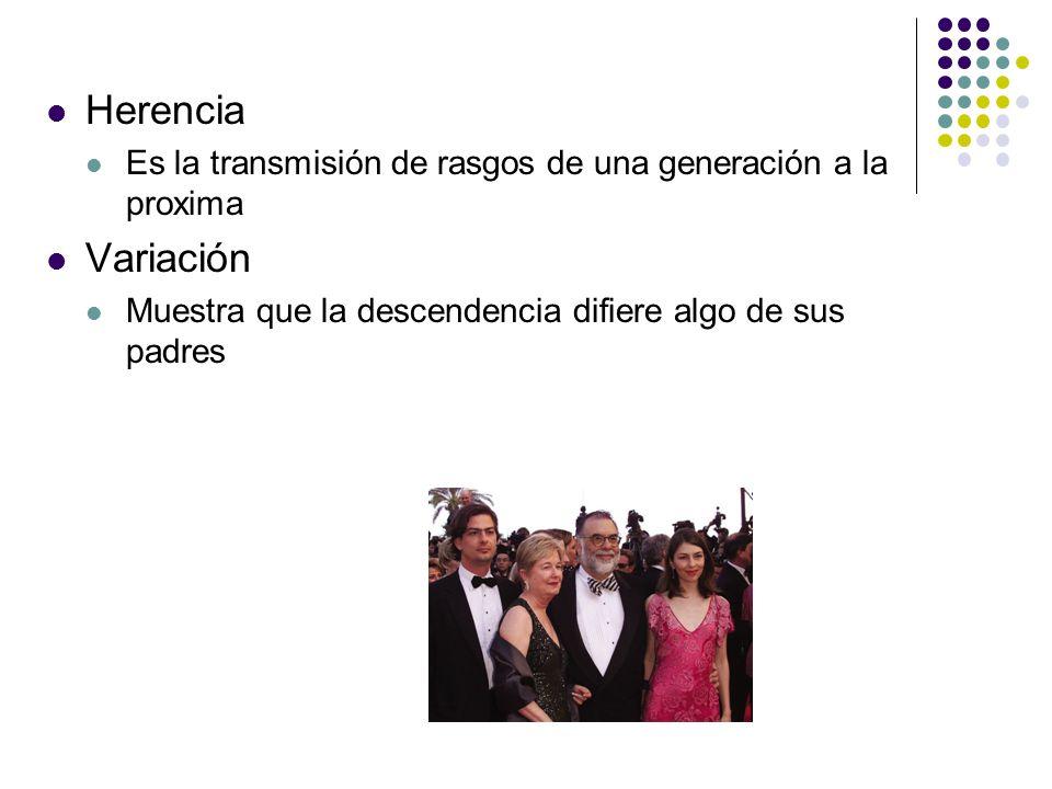Herencia Es la transmisión de rasgos de una generación a la proxima.