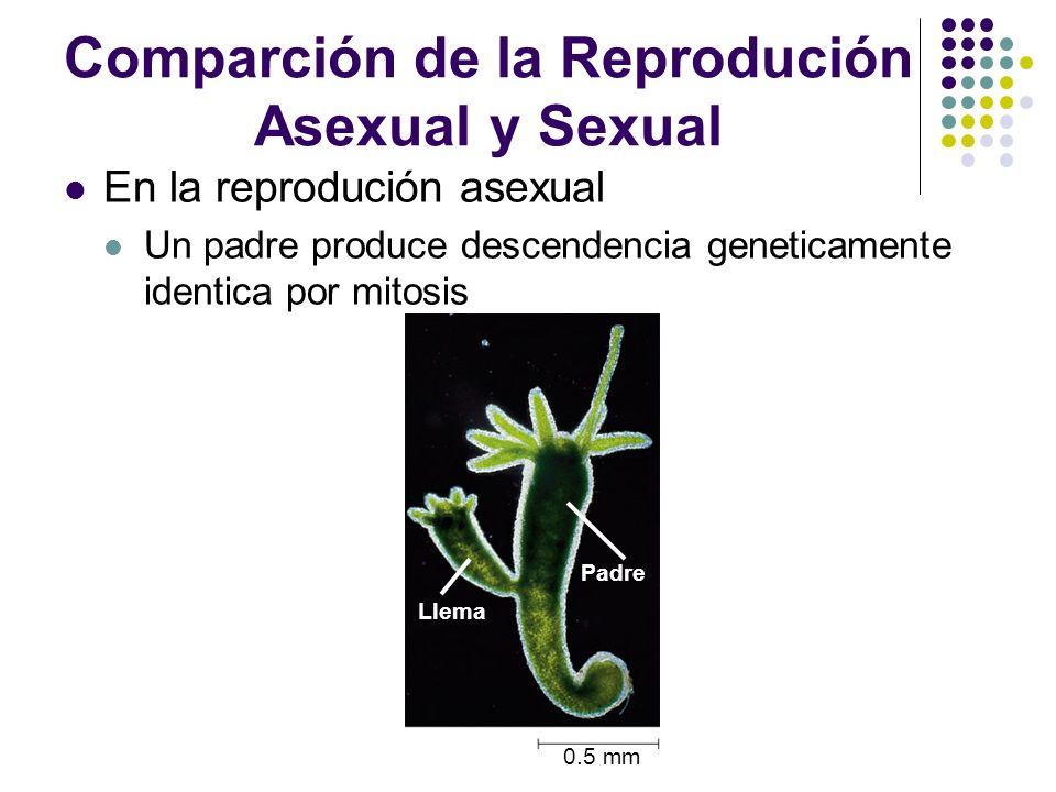 Comparción de la Reprodución Asexual y Sexual