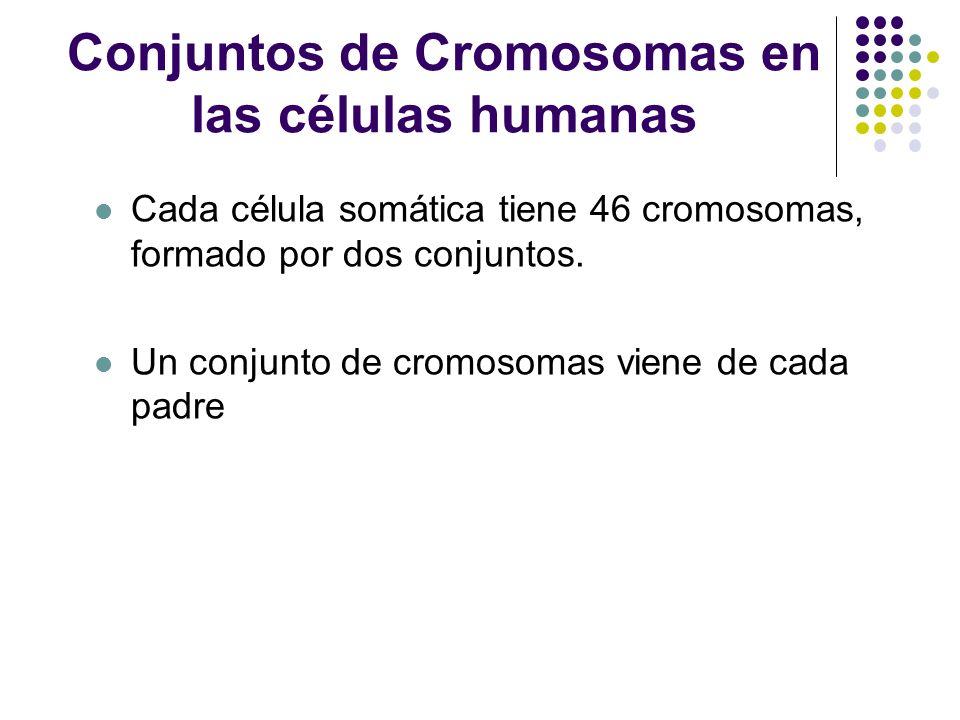 Conjuntos de Cromosomas en las células humanas