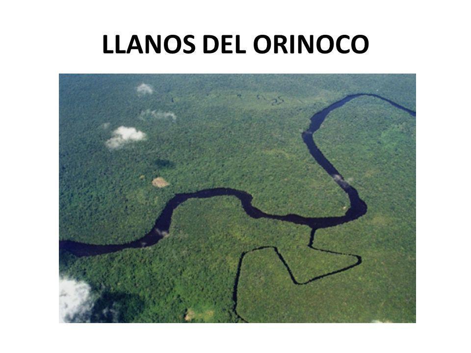 LLANOS DEL ORINOCO