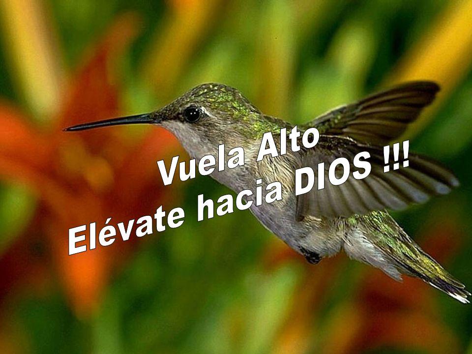 Vuela Alto Elévate hacia DIOS !!!