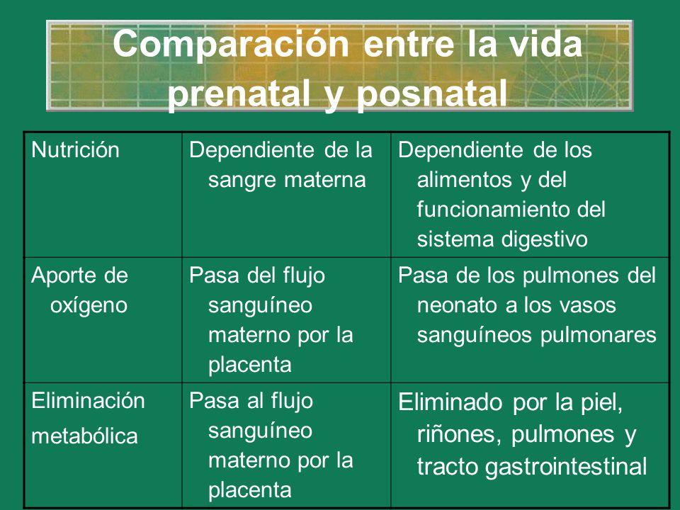 Comparación entre la vida prenatal y posnatal