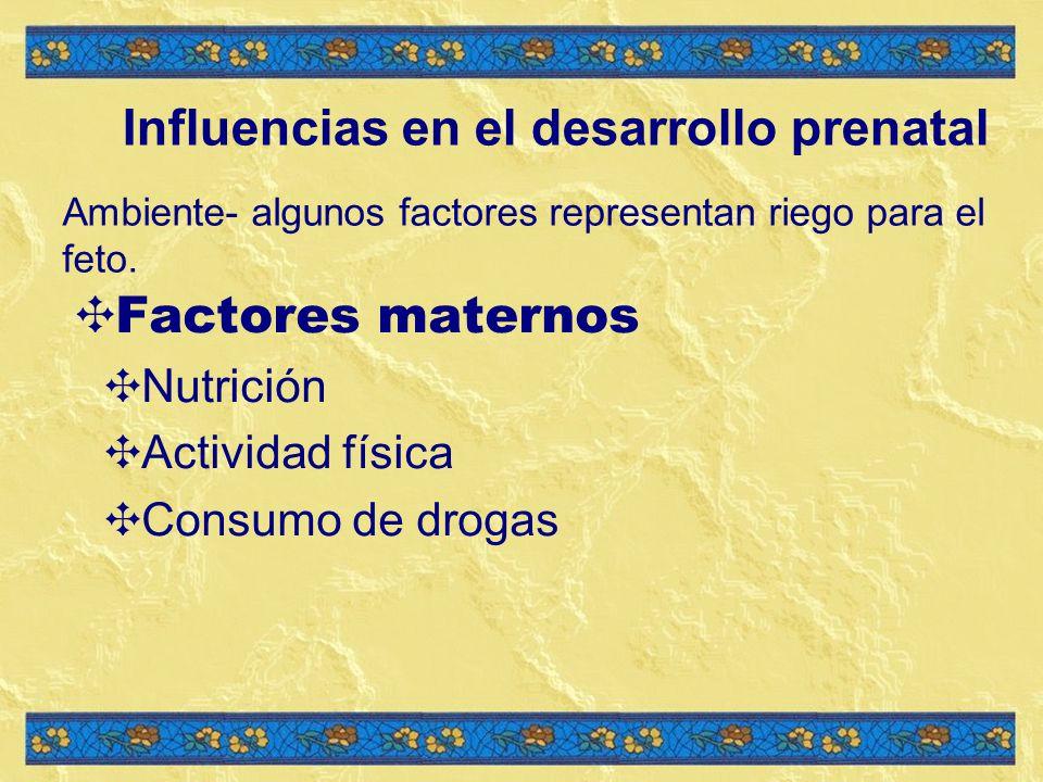 Influencias en el desarrollo prenatal