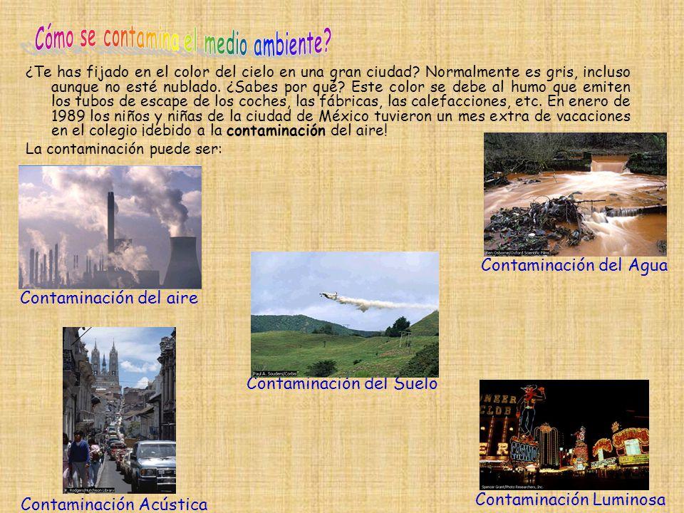 Cómo se contamina el medio ambiente