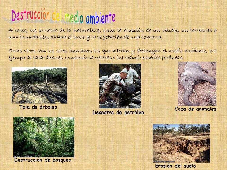 Destrucción del medio ambiente