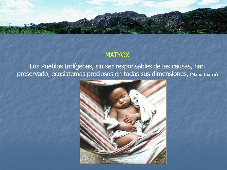 MATYOXLos Pueblos Indígenas, sin ser responsables de las causas, han preservado, ecosistemas preciosos en todas sus dimensiones, (Mario Ibarra)