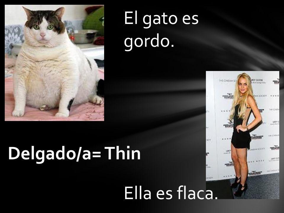 El gato es gordo. Delgado/a= Thin Ella es flaca.
