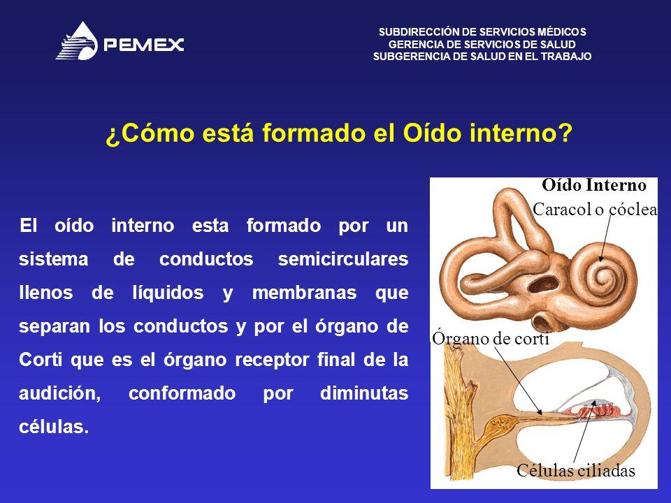 ¿Cómo está formado el Oído interno