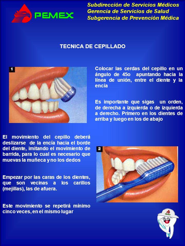 TECNICA DE CEPILLADO Colocar las cerdas del cepillo en un ángulo de 45o apuntando hacia la línea de unión, entre el diente y la encía.