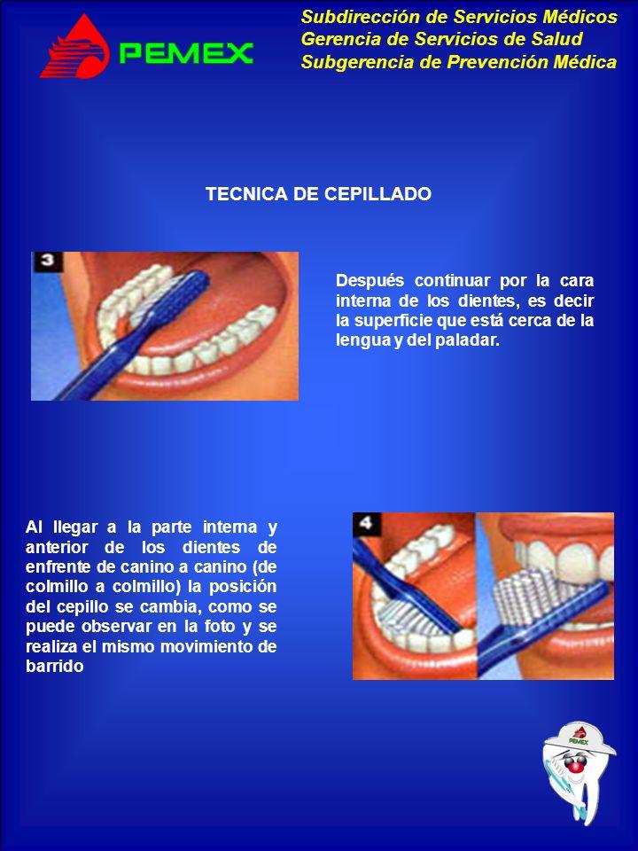 TECNICA DE CEPILLADO Después continuar por la cara interna de los dientes, es decir la superficie que está cerca de la lengua y del paladar.
