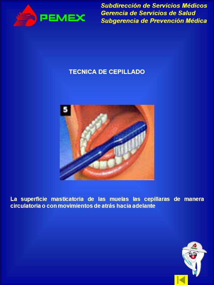 TECNICA DE CEPILLADOLa superficie masticatoria de las muelas las cepillaras de manera circulatoria o con movimientos de atrás hacia adelante.