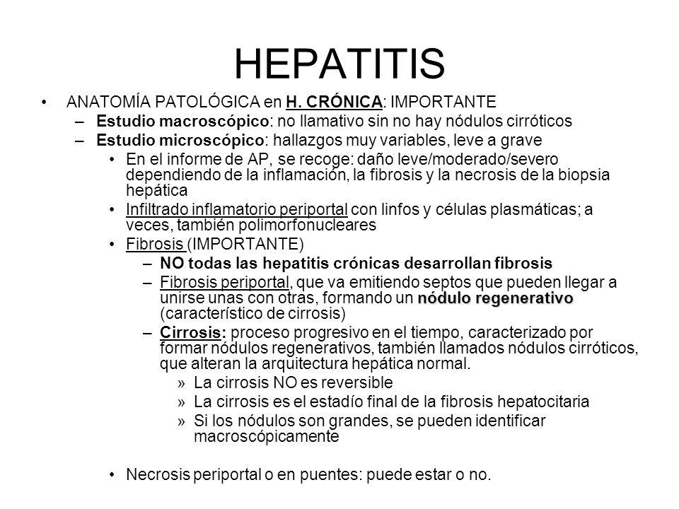 HEPATITIS ANATOMÍA PATOLÓGICA en H. CRÓNICA: IMPORTANTE