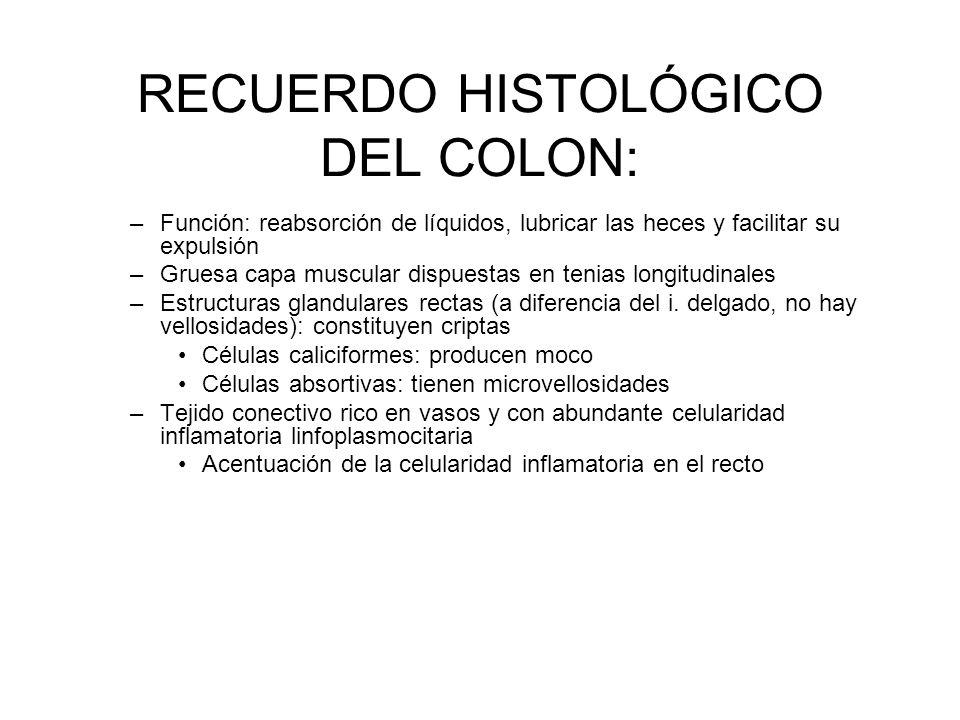 RECUERDO HISTOLÓGICO DEL COLON:
