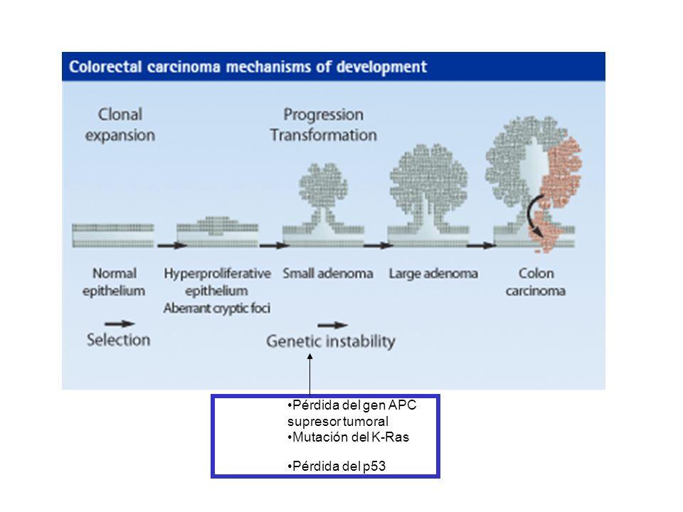 Pérdida del gen APC supresor tumoral