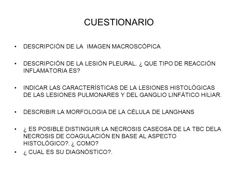 CUESTIONARIO DESCRIPCIÓN DE LA IMAGEN MACROSCÓPICA