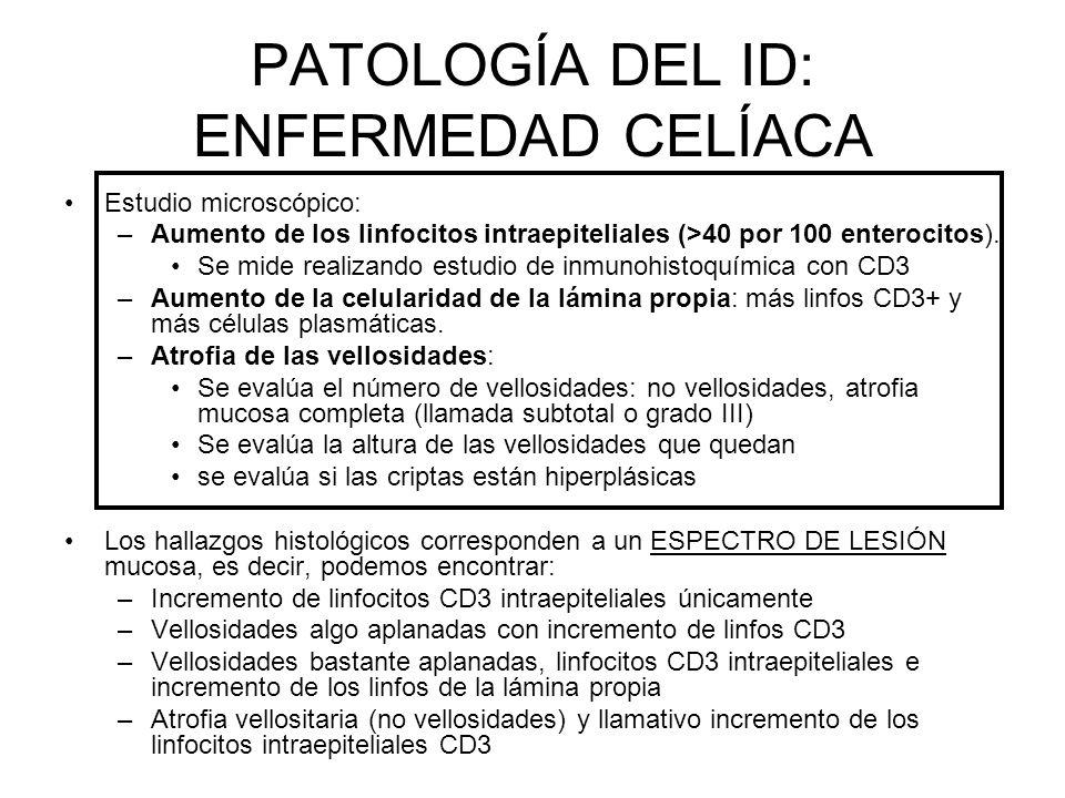 PATOLOGÍA DEL ID: ENFERMEDAD CELÍACA