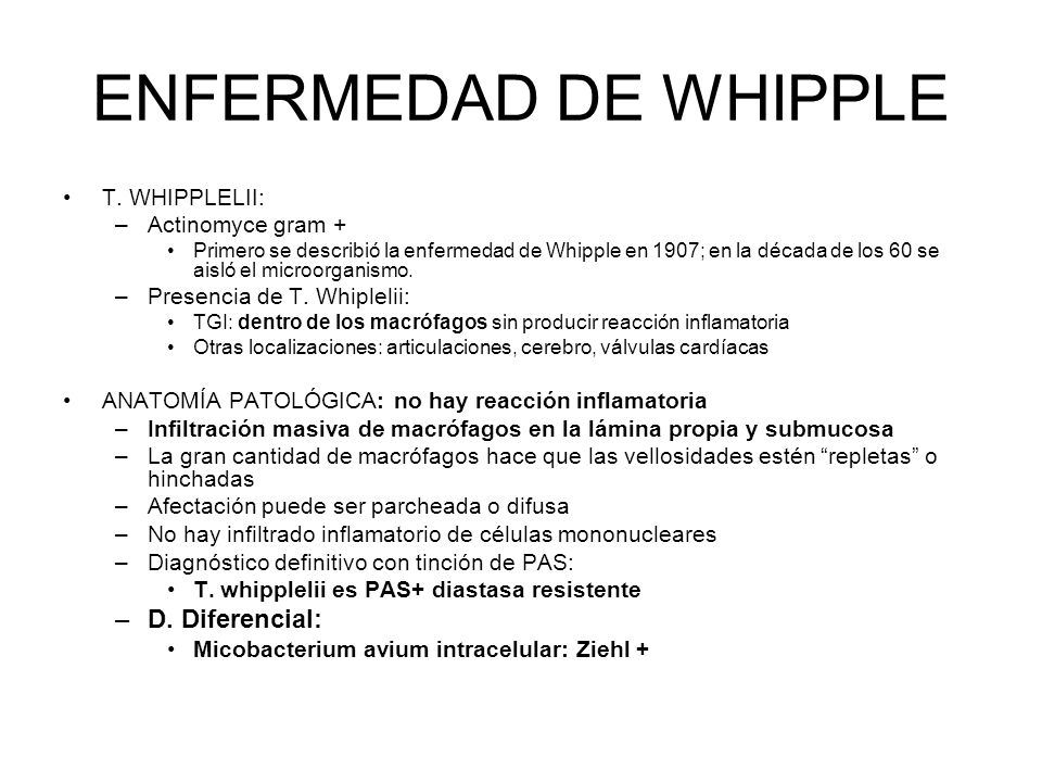ENFERMEDAD DE WHIPPLE D. Diferencial: T. WHIPPLELII: Actinomyce gram +
