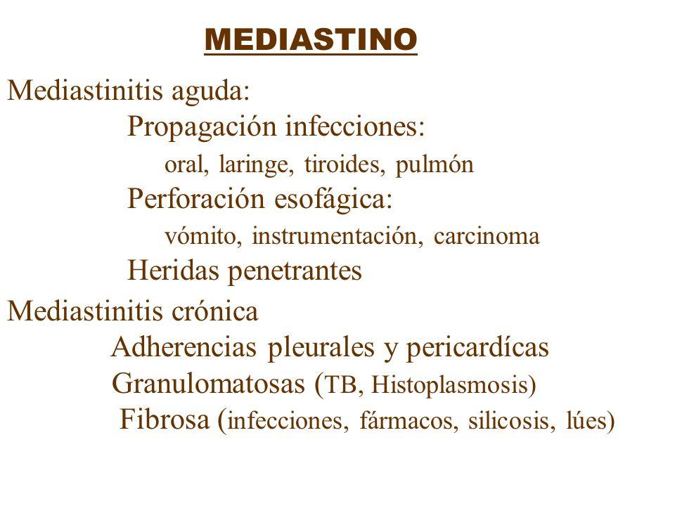 MEDIASTINOMediastinitis aguda: Propagación infecciones: oral, laringe, tiroides, pulmón. Perforación esofágica:
