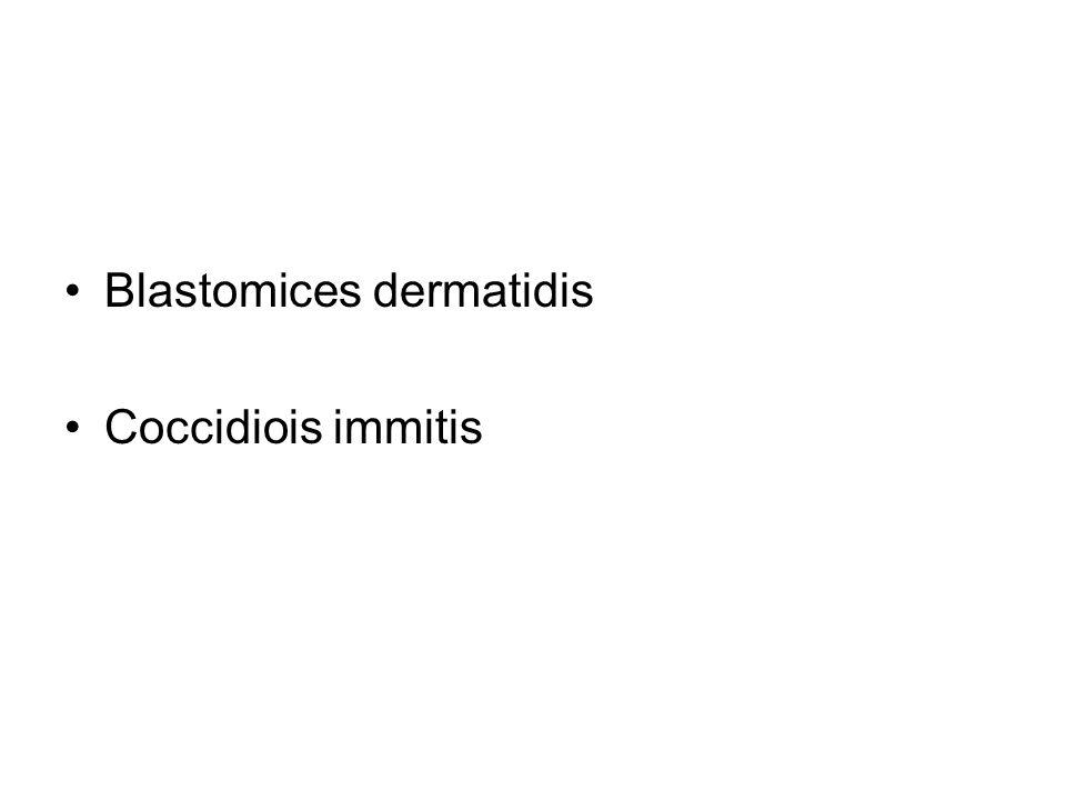 Blastomices dermatidis