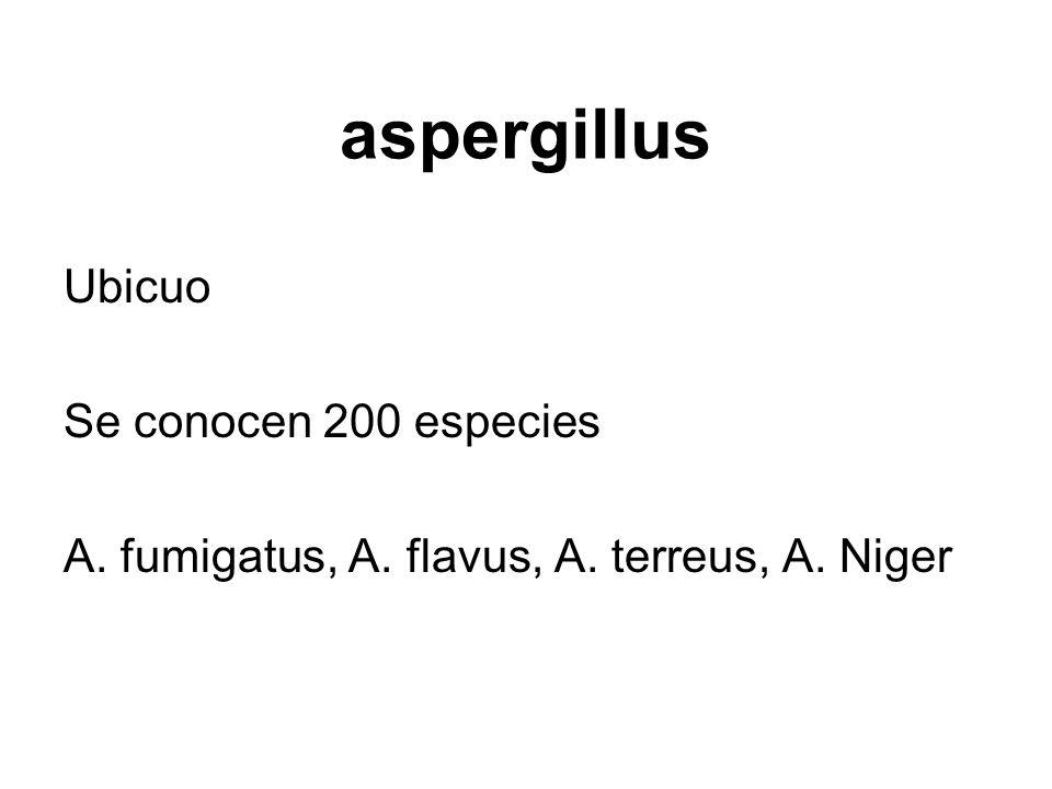 aspergillus Ubicuo Se conocen 200 especies