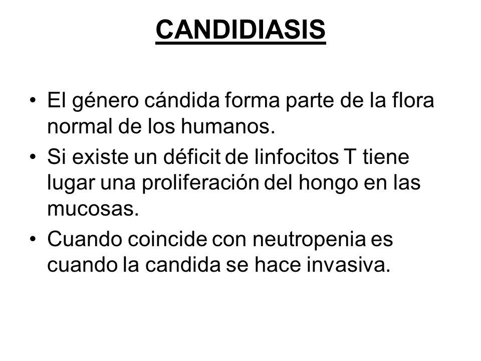 CANDIDIASIS El género cándida forma parte de la flora normal de los humanos.