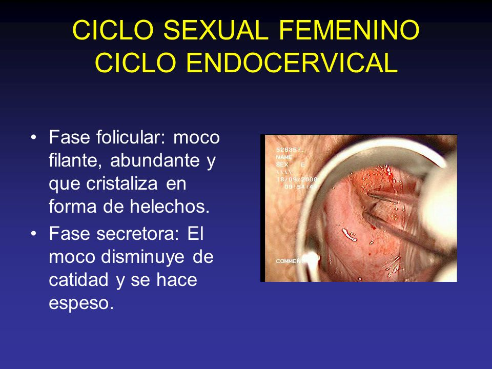 CICLO SEXUAL FEMENINO CICLO ENDOCERVICAL