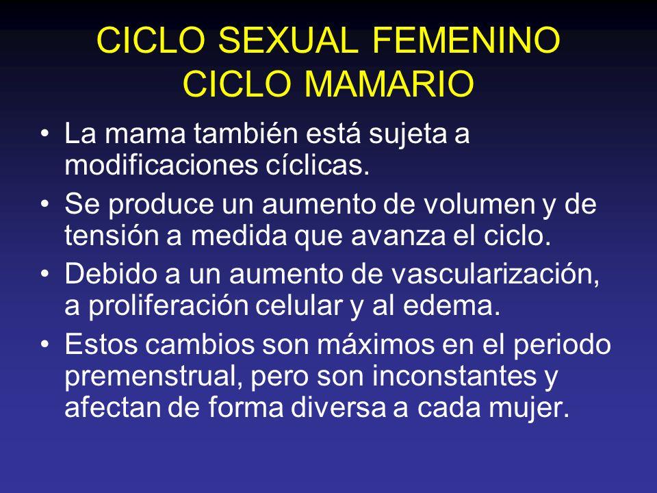 CICLO SEXUAL FEMENINO CICLO MAMARIO