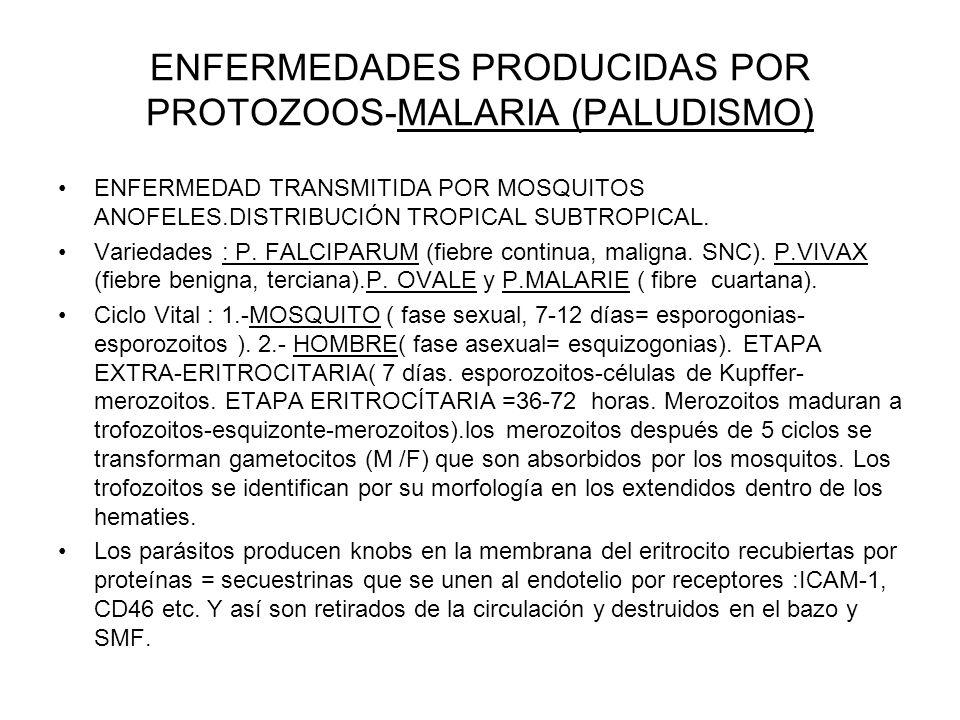 ENFERMEDADES PRODUCIDAS POR PROTOZOOS-MALARIA (PALUDISMO)