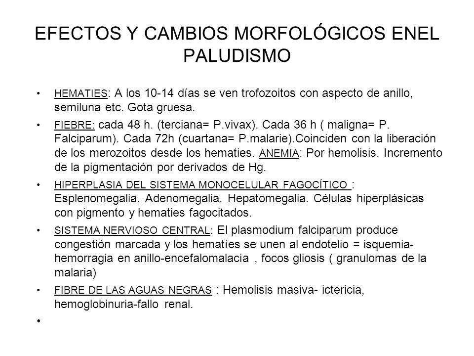 EFECTOS Y CAMBIOS MORFOLÓGICOS ENEL PALUDISMO