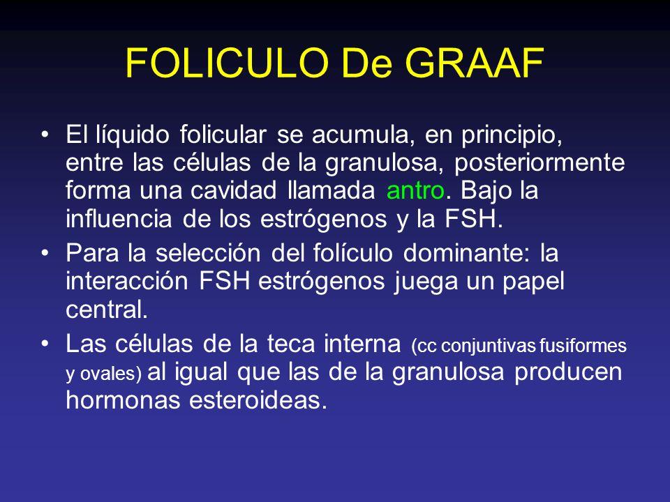 FOLICULO De GRAAF