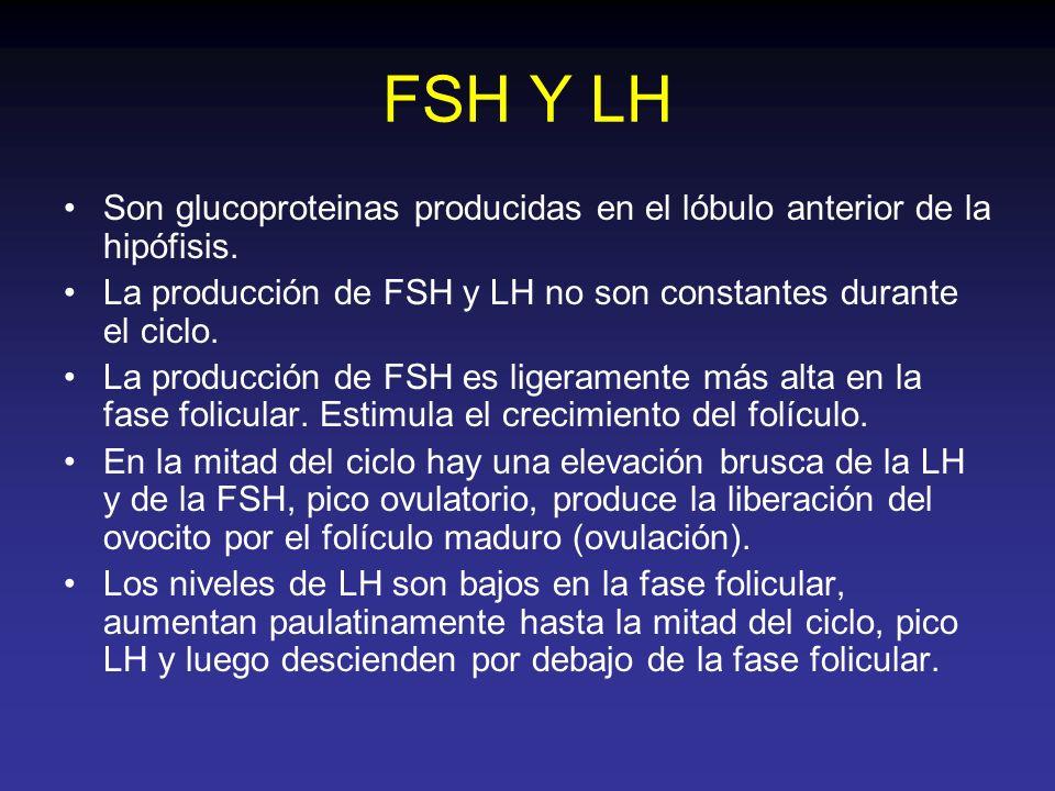 FSH Y LH Son glucoproteinas producidas en el lóbulo anterior de la hipófisis. La producción de FSH y LH no son constantes durante el ciclo.