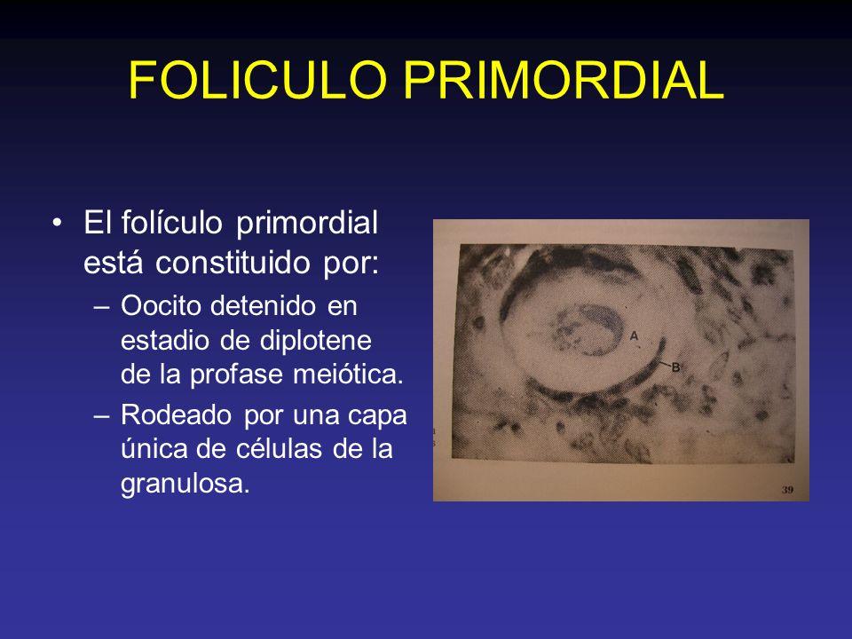FOLICULO PRIMORDIAL El folículo primordial está constituido por: