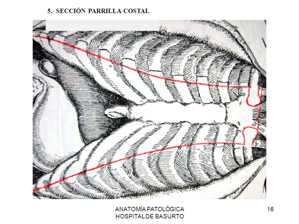 ANATOMÍA PATOLÓGICA HOSPITAL DE BASURTO