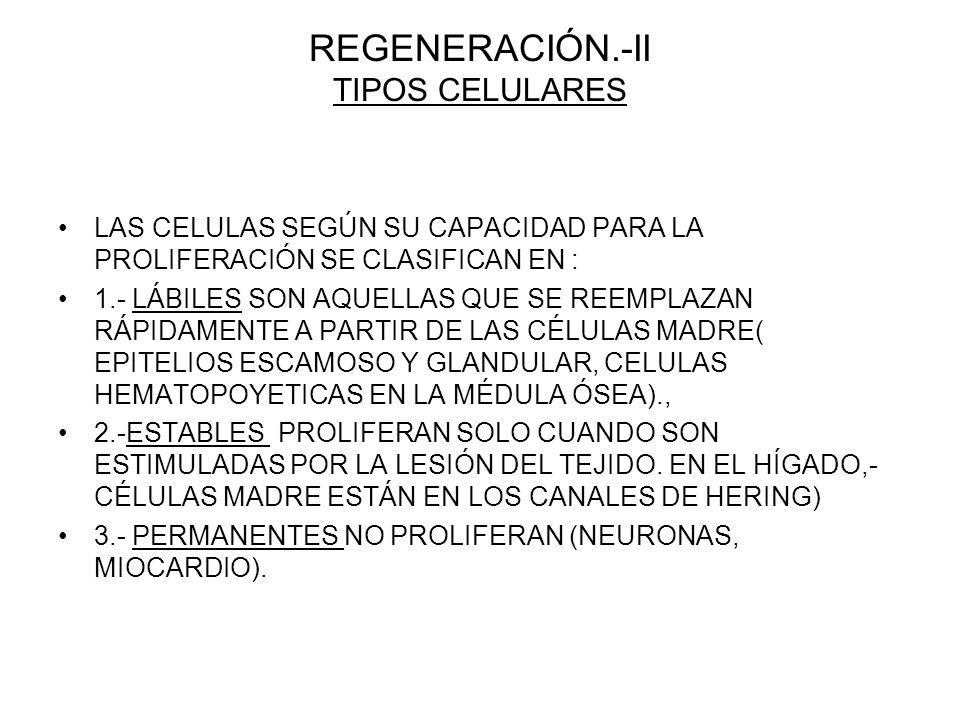 REGENERACIÓN.-II TIPOS CELULARES