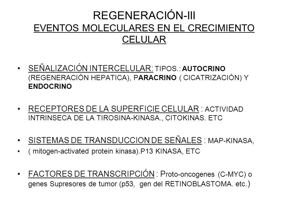 REGENERACIÓN-III EVENTOS MOLECULARES EN EL CRECIMIENTO CELULAR
