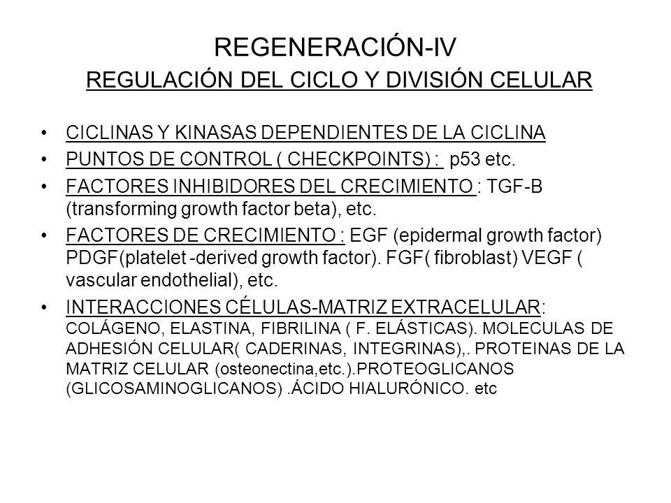 REGENERACIÓN-IV REGULACIÓN DEL CICLO Y DIVISIÓN CELULAR