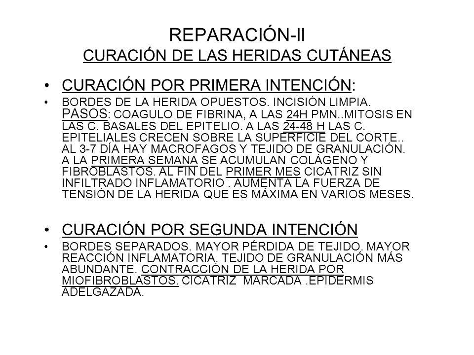 REPARACIÓN-II CURACIÓN DE LAS HERIDAS CUTÁNEAS