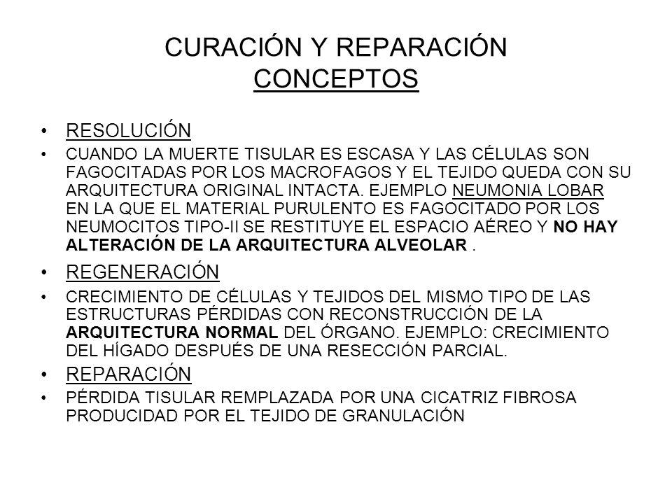 CURACIÓN Y REPARACIÓN CONCEPTOS