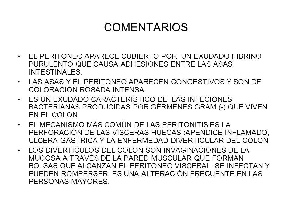 COMENTARIOS EL PERITONEO APARECE CUBIERTO POR UN EXUDADO FIBRINO PURULENTO QUE CAUSA ADHESIONES ENTRE LAS ASAS INTESTINALES.