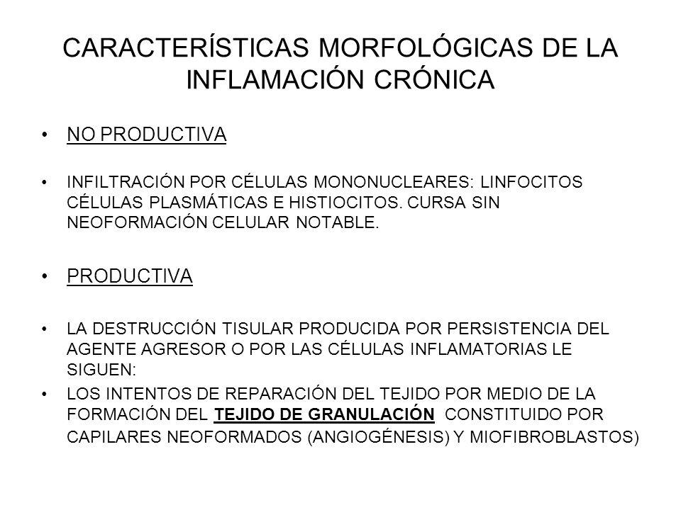 CARACTERÍSTICAS MORFOLÓGICAS DE LA INFLAMACIÓN CRÓNICA