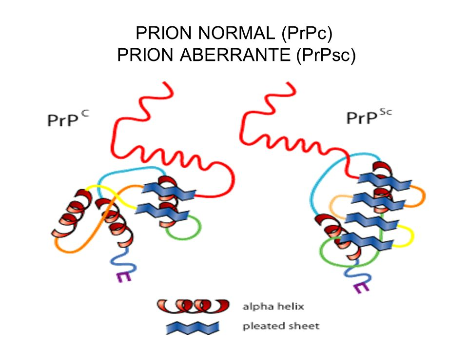 PRION NORMAL (PrPc) PRION ABERRANTE (PrPsc)